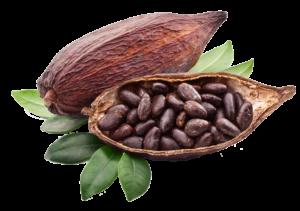 cacao-feve